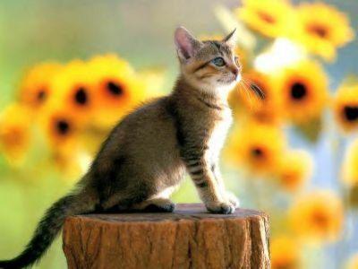 Le chat sur le tronc dans Chats chat